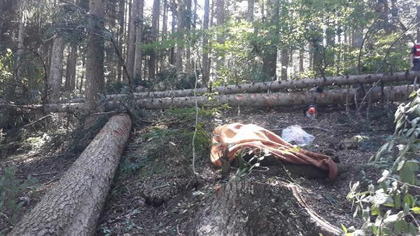 Kestiği ağacın altında kalan orman işçisi öldü